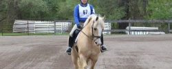 A Back to Basics Dressage Lesson